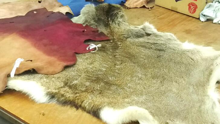 皮革工業技術支援センターで研究されている鹿の革